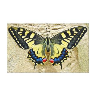 """Tiger Swallowtail Butterfly On Sand 20"""" x 12"""" Canvas Print"""