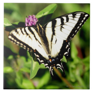 Tiger Swallowtail Butterfly. Papilio glacus. Tile