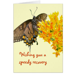 Tiger Swallowtail Butterfly (Papilio glaucas) Item Card