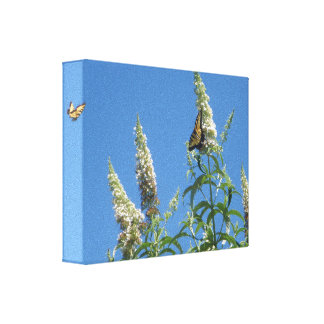 Tiger Swallowtails on Butterfly Bush Canvas Print