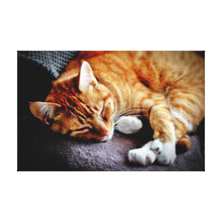 Tiger The Cat Snoozing Canvas Print
