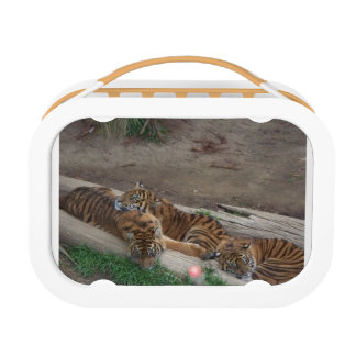Tiger Triplets Lunch Box