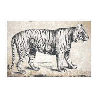 Tiger Vintage Wildlife Grunge Decorative Canvas Print