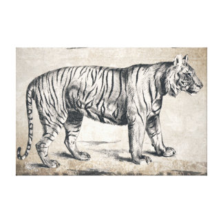 Tiger Vintage Wildlife Grunge Decorative Canvas Print