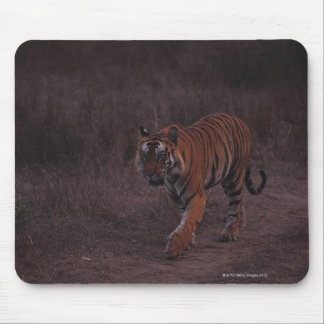 Tiger Walks along Trail Mouse Pad
