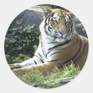 Tiger Watching Classic Round Sticker