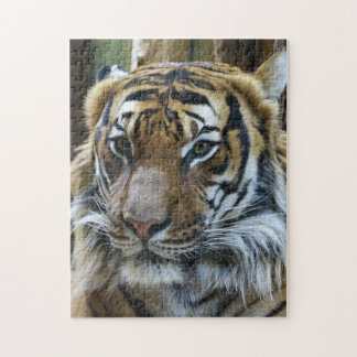 Tiger Whiskers Jigsaw Puzzle