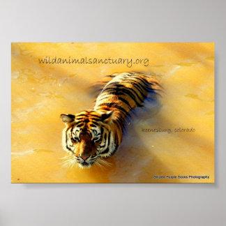 Tiger Wild.... Poster