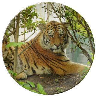 Tiger Wildlife Porcelain Plate
