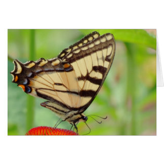 Tiger Wings - Butterfly Card