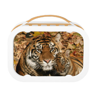 Tiger with Cub Yubo Lunch Box