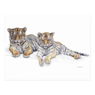 tigercubs postcard
