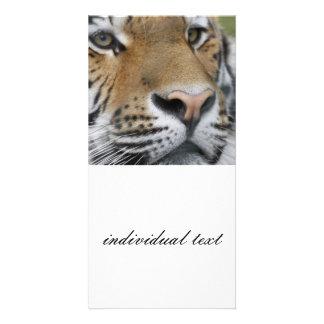 Tigerface closeup photo card