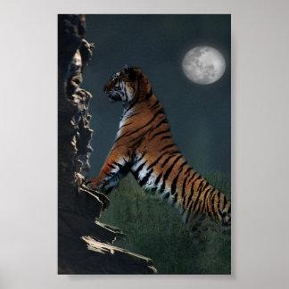 Tigers climb poster