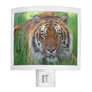Tigers Eyes Night Lites