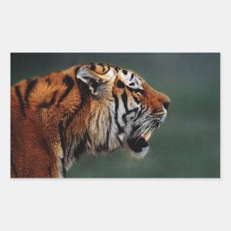 Tigers fangs sticker
