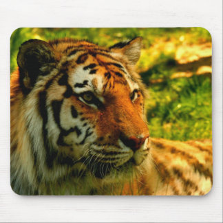 Tigers pad mouse pad
