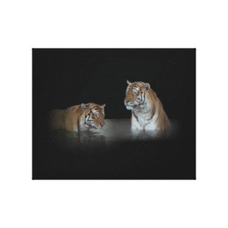 Tigers Stretched Canvas Print