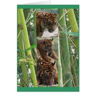 Tigers Three Card
