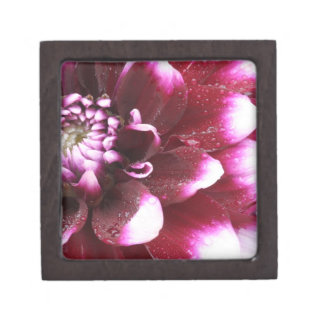 Tight in photographs of Dalhia flower with the Premium Trinket Boxes