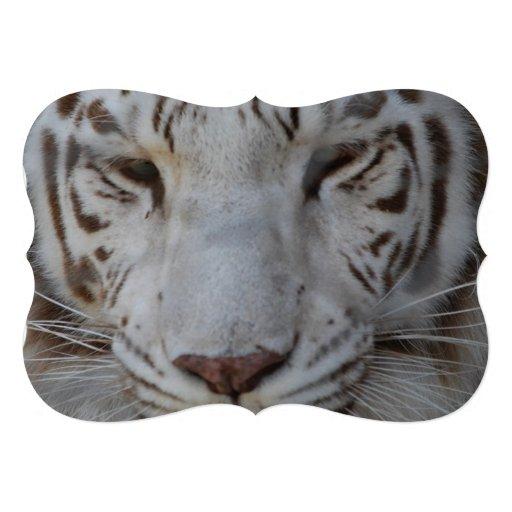 Tigre blanc doux bristols personnalisés