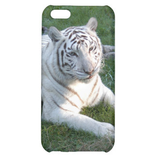 Tigre blanc i