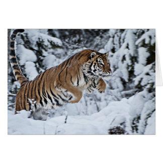 Tigre Carte De Vœux
