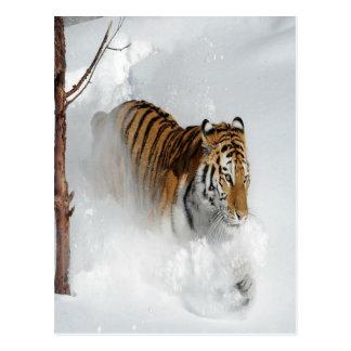 Tigre dans la neige carte postale