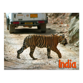 Tigre de Bengale Carte Postale