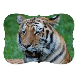 Tigre de grognement