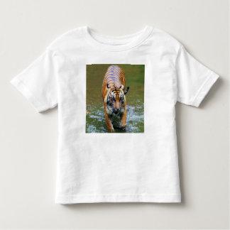 Tigre de Sumatran Tshirts