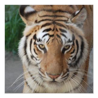 Tigre doux carton d'invitation  13,33 cm