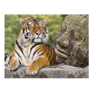 Tigre et temple bouddhiste carte postale