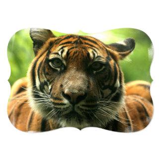Tigre Carton D'invitation 12,7 Cm X 17,78 Cm