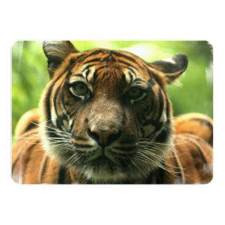 Tigre Faire-part Personnalisé