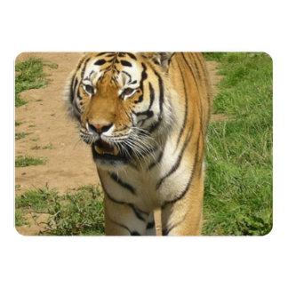 Tigre Invitation