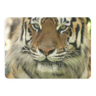 Tigre Bristol Personnalisé