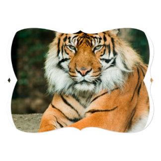 Tigre orange faire-parts