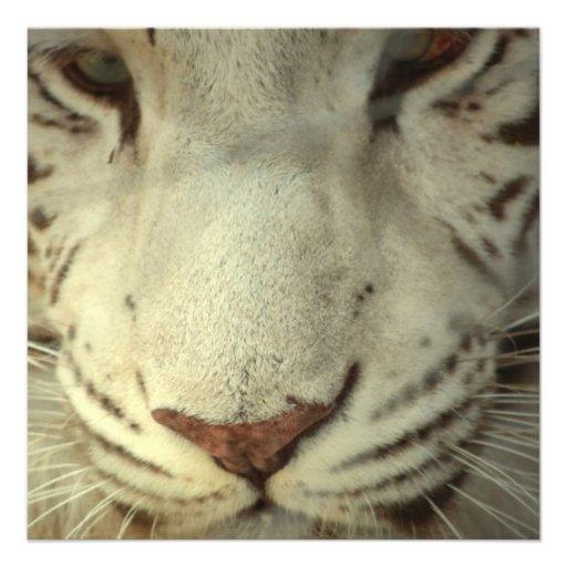 Tigre rayé blanc faire-part personnalisé