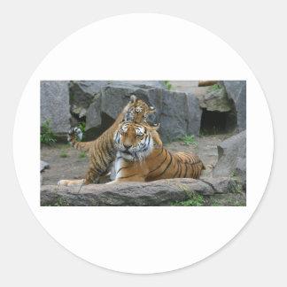Tigress and playful tiger cub 1 round sticker