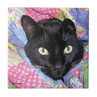 Tile: Funny Cat wrapped in Blankets Tile