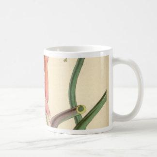 Tillandsia bulbosa coffee mug