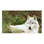 Timber or Grey wolf Pack Of Standard Business Cards
