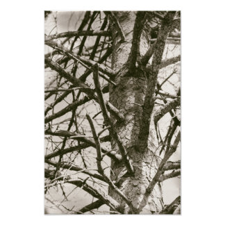 Timber Tree Pine Branches Organic Forest Poster
