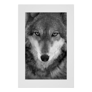 Timber Wolf #1 Poster