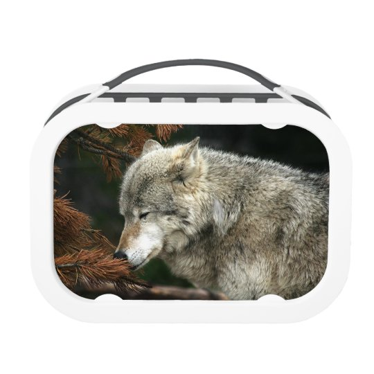 Timber wolf lunch box