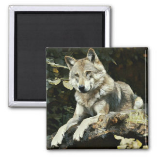 Timber Wolf Painting Square Magnet