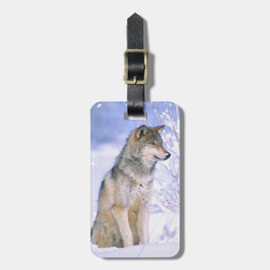 Timber Wolf sitting in the Snow, Canis lupus, Luggage Tag