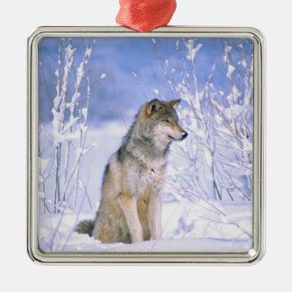 Timber Wolf sitting in the Snow, Canis lupus, Metal Ornament