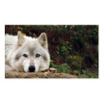 Timber wolf stare business card templates
